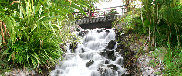 (insert waterfall in miri park)